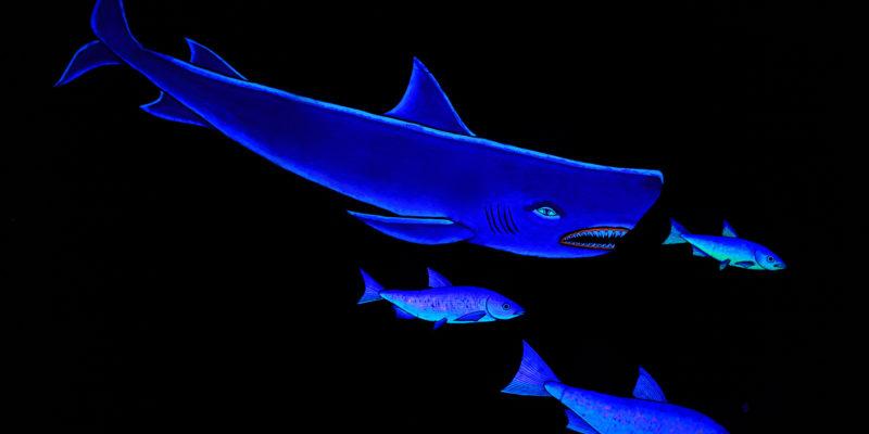 SharkChase
